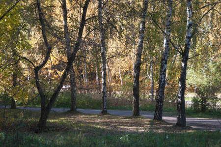 Autumn landscape in Sokolniki park in Moscow, Russia