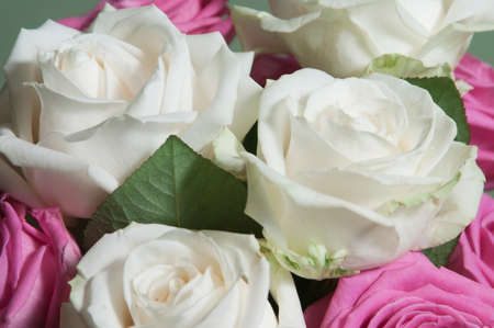 Roses posy over green background, closeup shot Imagens