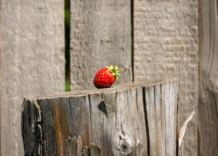 Concept. Red strawberry berry on an old wooden post. Close-up of a berry and a fence. Selective focus Stock fotó - 152481541
