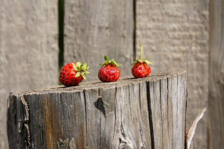 Concept. Red strawberry berry on an old wooden post. Close-up of a berry and a fence. Selective focus Stock fotó