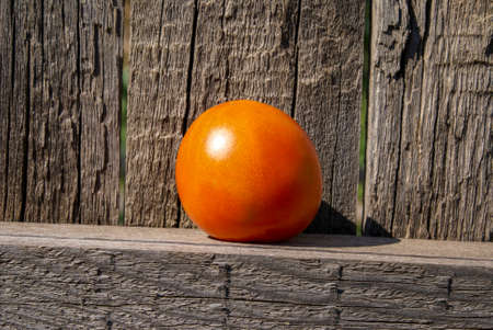 Concept. Red tomato on an old wooden fence. Tomato close-up, selective focus