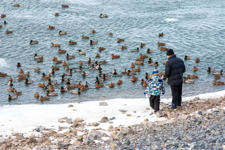 A man with a child feeds a flock of wild ducks swimming in a harsh winter river. Siberia