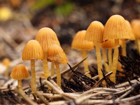 Group of mushroom photo