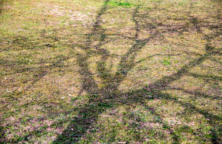 nearness: tree shadow on grass on a sunny day