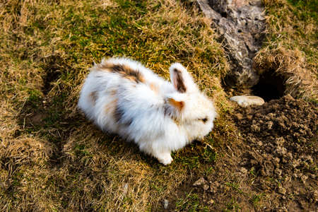 Konijn in het vroege voorjaar een gat graven Stockfoto