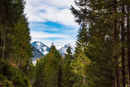 early spring forest in Alps in Bavaria