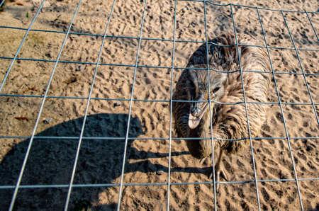 emu: Retrato de un Emu en Alemania a principios de primavera Foto de archivo