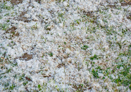 floccus: fuzz on the ground outdoors in Germany Stock Photo