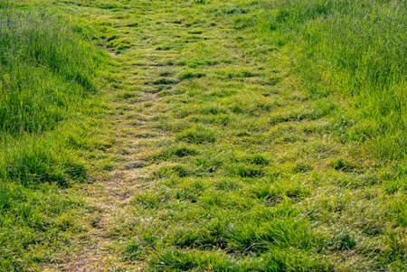 tire marks: Tire marks in the grass, detail of footprints in the field in Germany Stock Photo