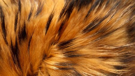 Fur Texture of Raccoon Close Up. Natural Fur Photography. Shallow focuse.