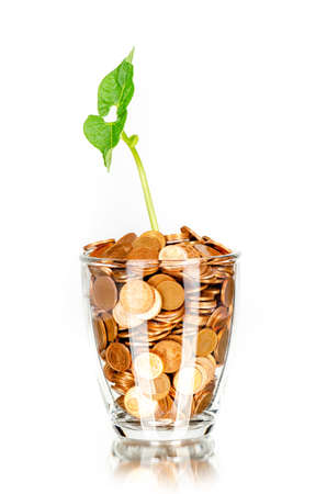 young sprouting plant on a glass full of coins