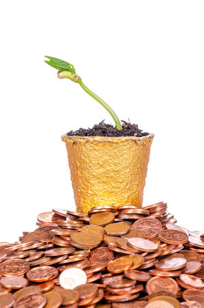 young sprouting plant in a little golden plant pott an a heap of coins