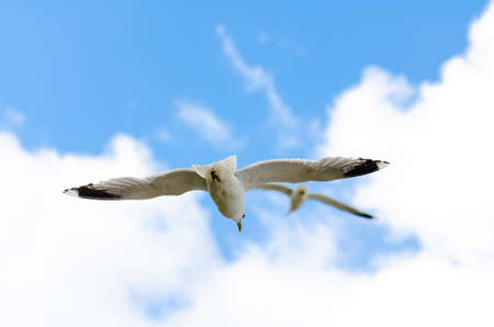 two seagulls in front of cloudy sky 版權商用圖片