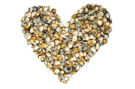 a heart-shaped collection of seashells on white background, isolated
