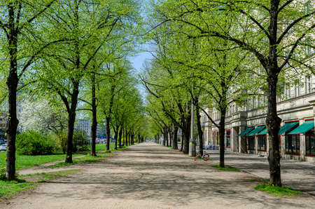 pathway with trees in spring in berlin, blue sky 版權商用圖片