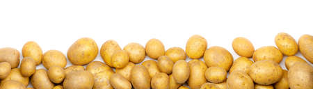 a heap of potatoes as banner, border, headline, header or panorama, isolated with white background Banco de Imagens