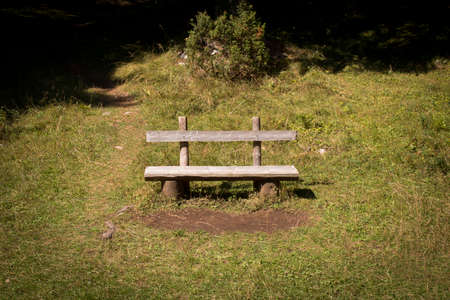 An old wooden bench in a forest clearing