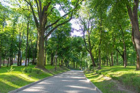 Allée dans le parc un matin d'été Banque d'images