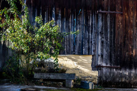 wooden barn and shrub in abandoned courtyard Stock Photo