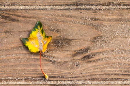 Wooden texture with autumn leaf