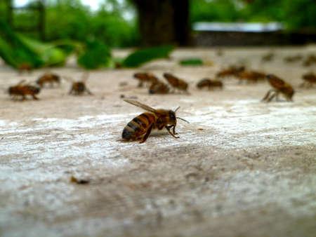 Single bee on old wood