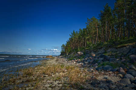 Stony coastline with forest in HDR