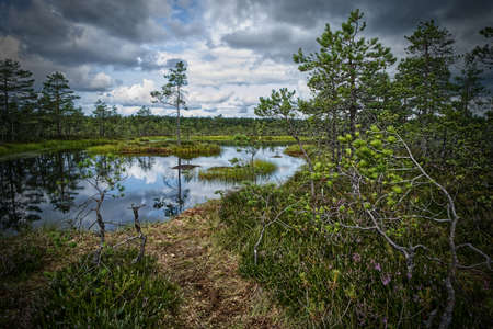 Swamp in the Lahemaa National Park in HDR