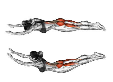 resistive: Exercise like fly. Exercising for Fitness. Target muscles are marked in red. Initial and final steps. 3D illustration Stock Photo
