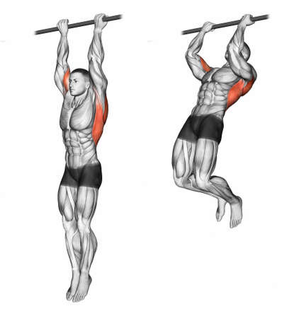 crossbar: Pulling up on the crossbar undergrip. Exercising for bodybuilding Target muscles are marked in red. 3D illustration