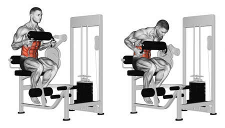 torso: Abdominal Crunch in AB machine. Exercising for bodybuilding Target muscles are marked in red. 3D illustration