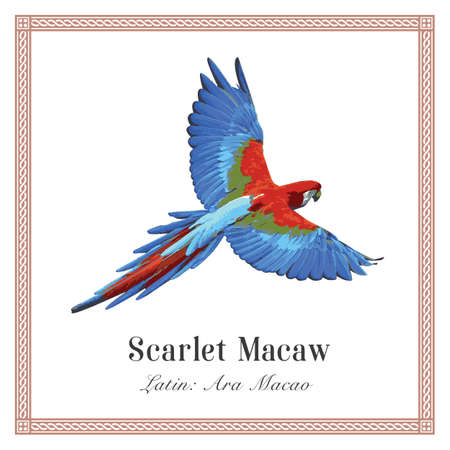 Scarlet Macaw Illustration. Tropical Bird. Ara macao. Parrot.