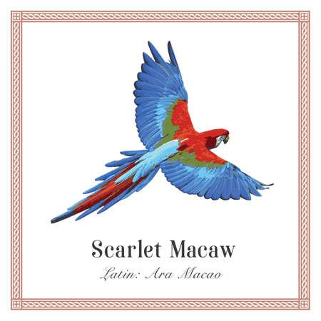 Scarlet Macaw Illustration. Tropical Bird. Ara macao. Parrot.