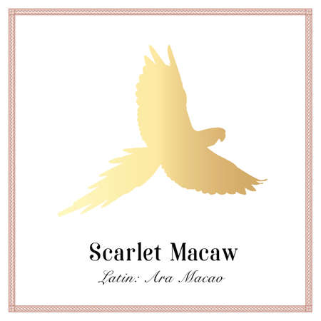 Scarlet macaw gold silhouette gradient illustration. Tropical bird, Ara macaw parrot.