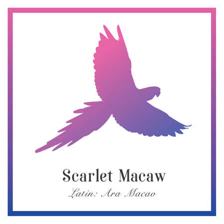Scarlet macaw silhouette gradient illustration. Tropical bird, Ara macaw parrot.