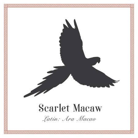 Scarlet Macaw Silhouette Illustration. Tropical Bird. Ara Macao. Parrot. Иллюстрация