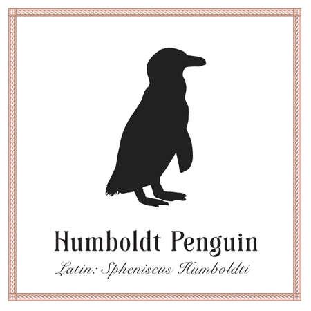 Humboldt Penguin Engraving Illustration. Latin Spheniscus Humboldti. Wild Arctic Ocean Bird.