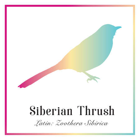 Siberian Thrush Bird in Color Gradient Silhouette Illustration.
