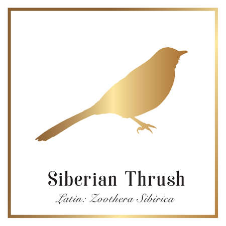 Siberian Thrush Bird in Golden Gradient Silhouette Illustration.