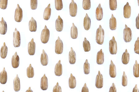 Sunflower Peeled Seeds Pattern. Isolated Background. Detailed Texture. Macro Closeup. Landscape Orientation Poster.