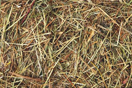 Farm hay texture. Dried grass. Stok Fotoğraf