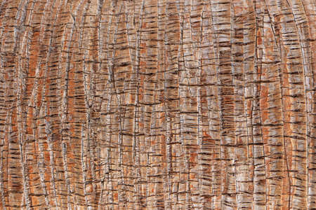Tropical tree trunk background. Palm bark pattern texture. Exotic wood backdrop. Stock Photo
