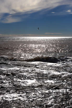 Seascape sunlight with seagull in the sky Stock Photo