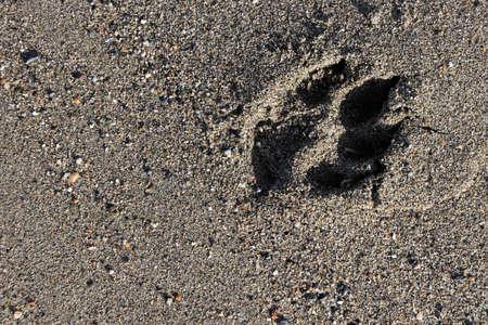 Dog trace on beach sand