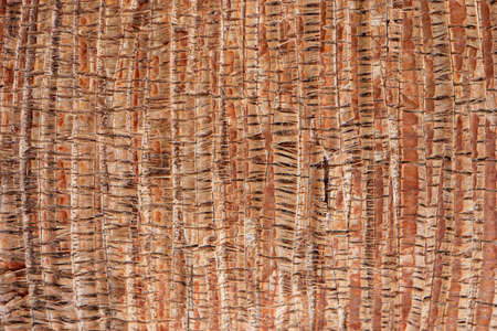 Palm bark pattern texture. Tropical tree trunk background. Exotic wood backdrop.