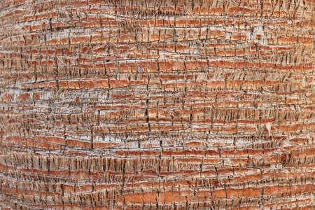 Exotic wood backdrop. Palm bark pattern texture. Tropical tree trunk background. Stok Fotoğraf