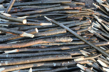 Many wood stakes filling background. Lot pointed branches.
