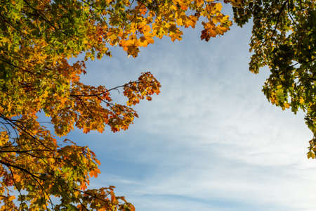 Orange and green maple leafs against cloudy blue sky photo