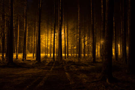scary forest: Dark scary forest