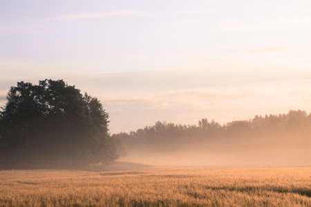 wheatfield: Foggy wheatfield in the morning sun with vintage effect added Stock Photo
