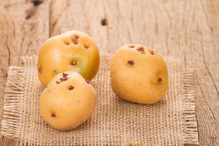 yellow potato or creole potato on old wooden table (Solanum phureja)